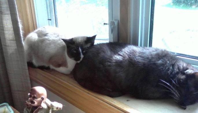 catfriends